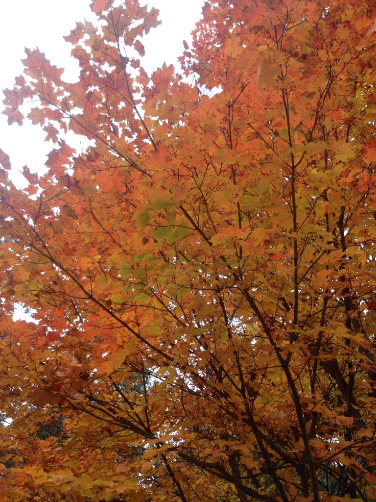 Gorg Michigan foliage.